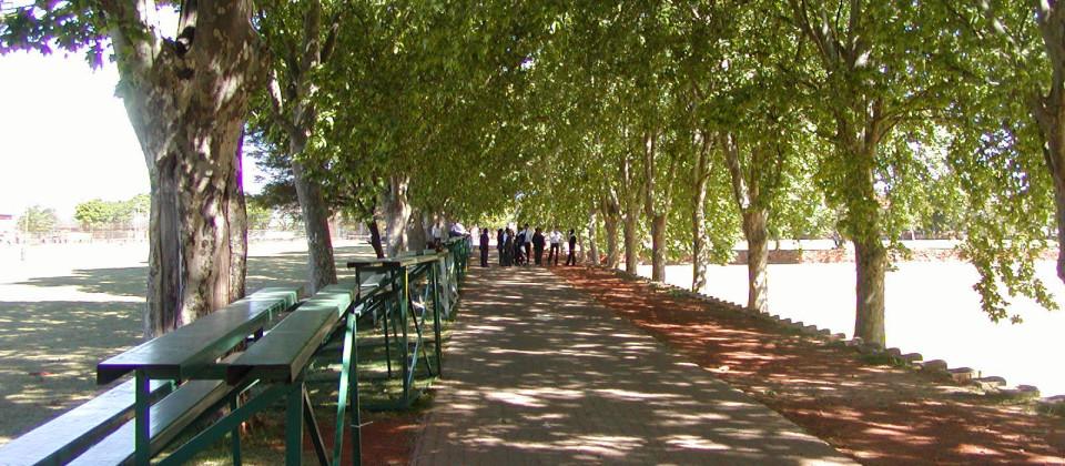 Plane-Tree-Avenue-2003